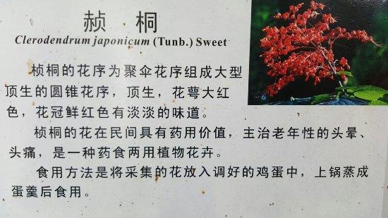 Sipsongpanna Botanical Garden, Chinese Academy of Sciences: 2016.7.4自由行西双版纳