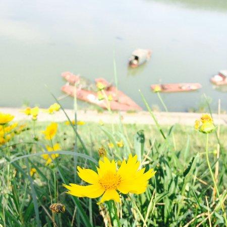 Langzhong, Kina: 阆中江畔,随处可见的野花让人心情明媚。