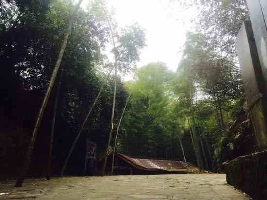 Tea Mountain Bamboo Sea: photo1.jpg