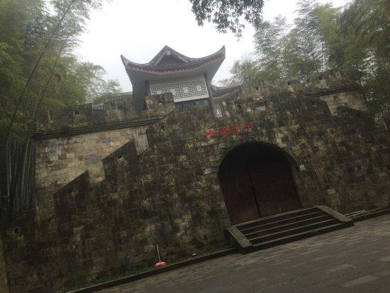 Tea Mountain Bamboo Sea: photo3.jpg
