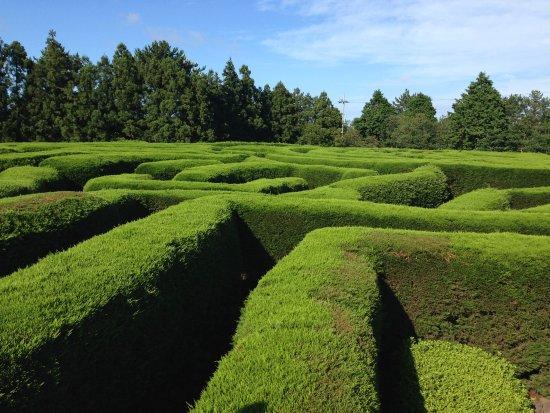 Kimnyoung Maze Park: 迷宫外观