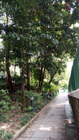 Balinese Mynah Bird Hong Kong Zoological And Botanical Gardens Hong Kong Resmi Tripadvisor