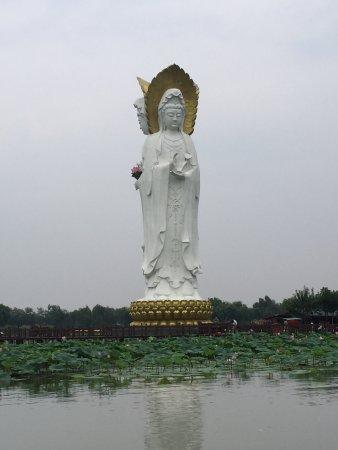 Anxin County, Китай: 白洋淀荷花大观园
