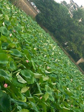 หยางโจว, จีน: photo4.jpg