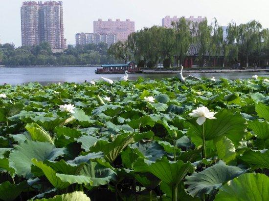 Цзинань, Китай: IMG_20160721_083047R_large.jpg
