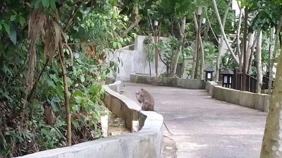 Pulau Gaya, Malaysia: 伽亚岛度假村