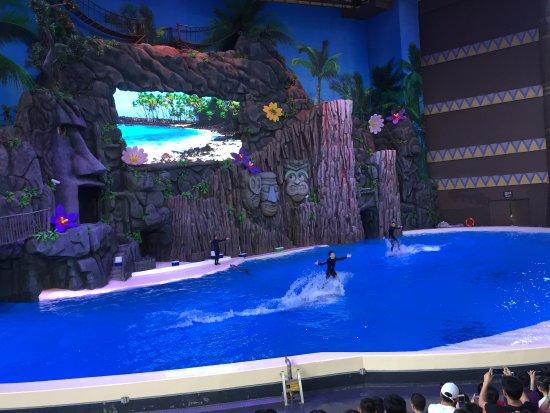 Zhuhai, China: 海豚表演
