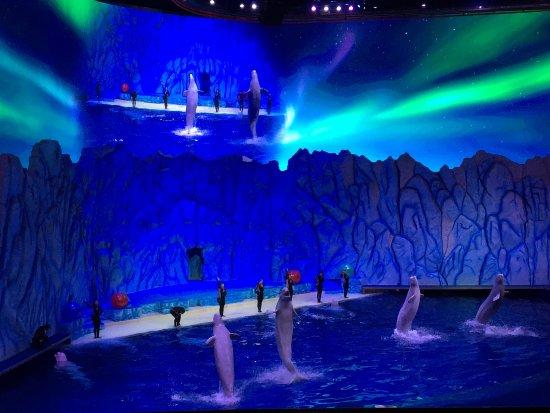 Zhuhai, China: 白鲸表演