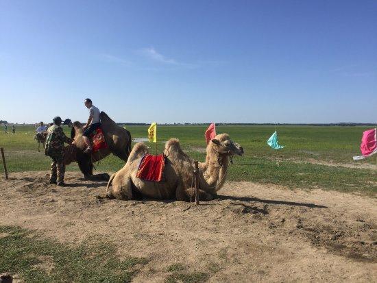 Zhangbei County, China: 来坝上草原就是来骑马,其余项目到处都有也不稀奇了,但骑马用的是这边最好的草原,120元玩了一圈,最后还要给教练40元,所以一个人花了160元。名片我有拿着,但是可能有做广告嫌疑,我就不发了,个