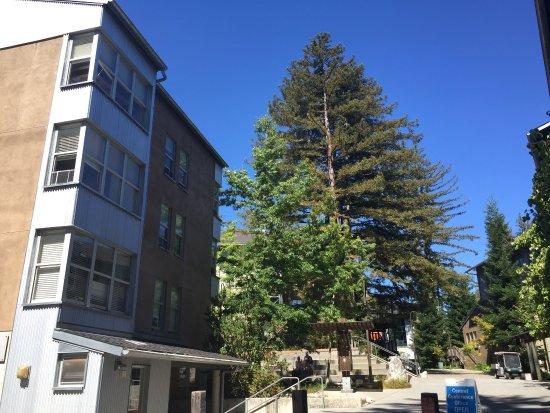 University of California at Santa Cruz: photo5.jpg