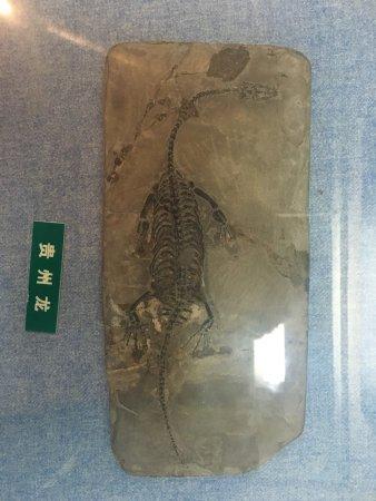 Jiangxi Museum : photo1.jpg
