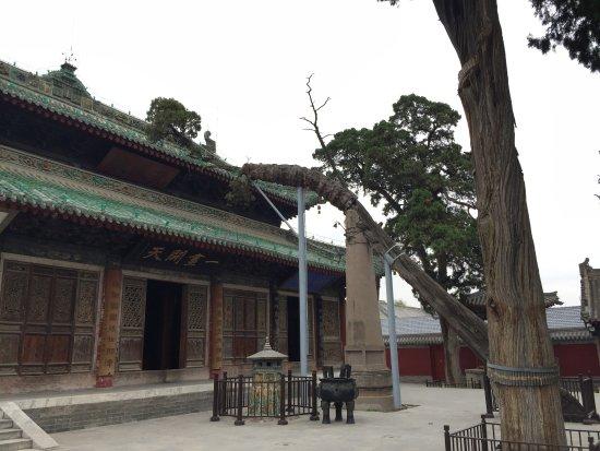 Fuxi Temple: 院内古树