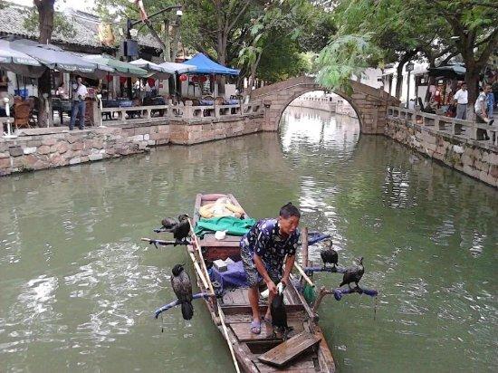 Tongli Town: 看鱼鹰抓鱼