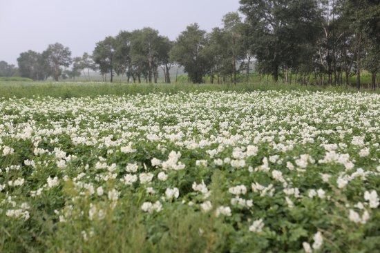 Zhangbei County, الصين: photo0.jpg