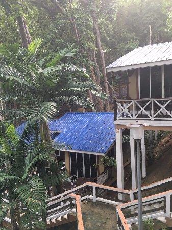 Coral View Island Resort: 猴哥就是早上从那片山上下来