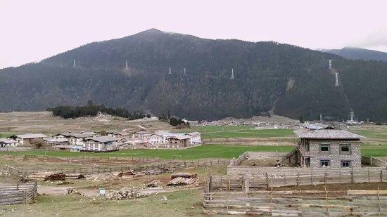 Lulang Forest: 1473254745886_large.jpg
