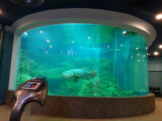 Picture of Marine Aquarium and Museum, Kota Kinabalu - TripAdvisor