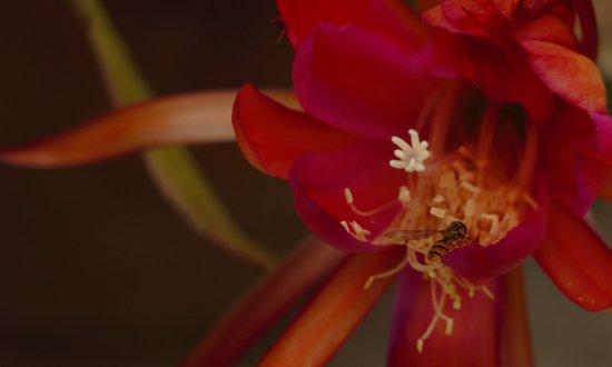 Burqin County, Çin: 小蜜蜂