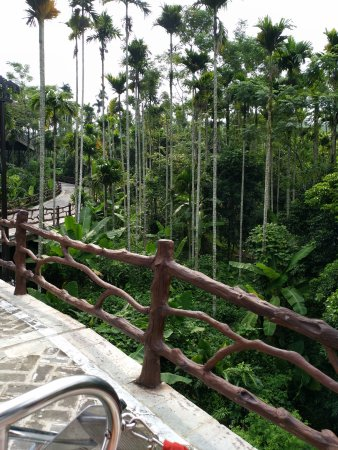 Areca Valley Tourist Resort of Hainan Ganza Ridge Primitive Culture: 细细长长的槟榔树