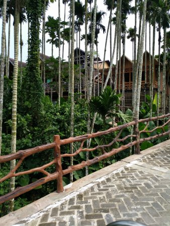 Areca Valley Tourist Resort of Hainan Ganza Ridge Primitive Culture: 槟榔树集群