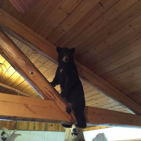Long Rifle Lodge: 骑在房梁上的熊