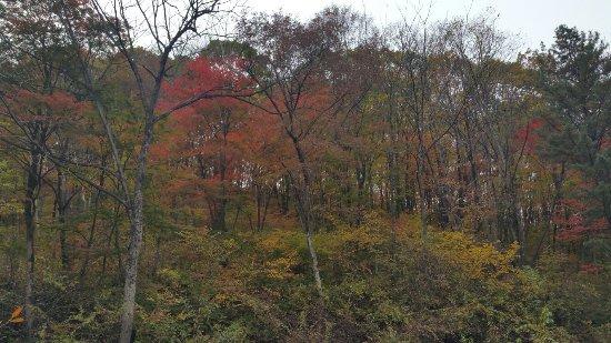 Tonghua, Cina: 五女峰国家森林公园