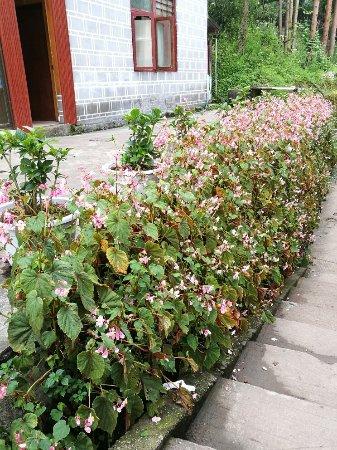 Dujiangyan, Chine : IMG_20160824_170724_large.jpg