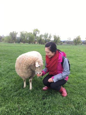 Fairlie, نيوزيلندا: photo0.jpg