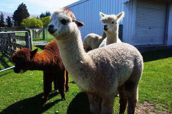 Fairlie, نيوزيلندا: photo3.jpg