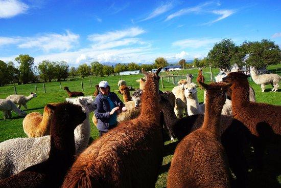 Fairlie, Yeni Zelanda: photo4.jpg