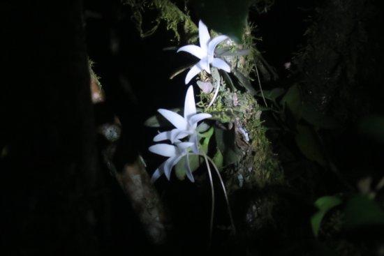 Fianarantsoa, Madagascar: night walk,nearby the road