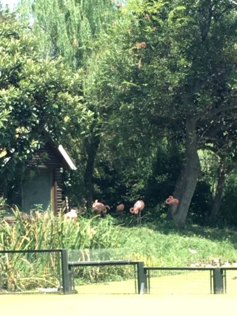 Zhuyuwan Scenic Spot (Yangzhou Zoo): photo2.jpg