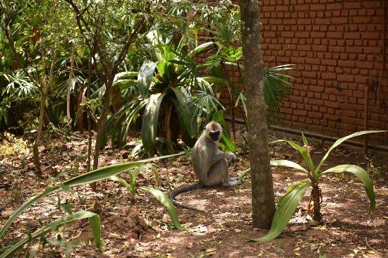 Hotel Sigiriya: photo5.jpg