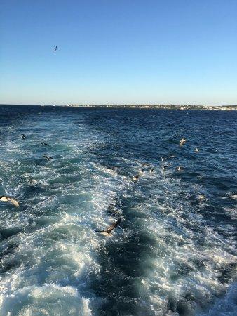 Udo: 海鸥很美