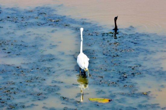 Tissamaharama, Sri Lanka: 水粉画,恬淡宁静