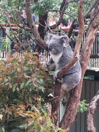 South Perth, ออสเตรเลีย: photo1.jpg