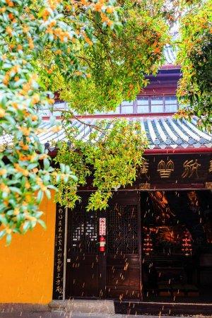 """Ningbo, Chine : """"八月桂花开,天童添幽香"""",看佛殿前晒金桂的僧人专心致志,想起一年中最好的季节已经来临,能够和最爱的家人在此团圆,是否也是一种最好的禅修?!"""