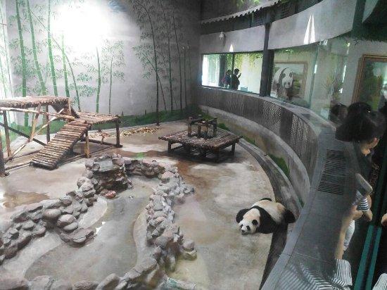 Jinghai County, China: IMG_20161005_120508R_large.jpg