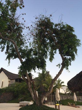 Angsana Balaclava Mauritius: photo3.jpg
