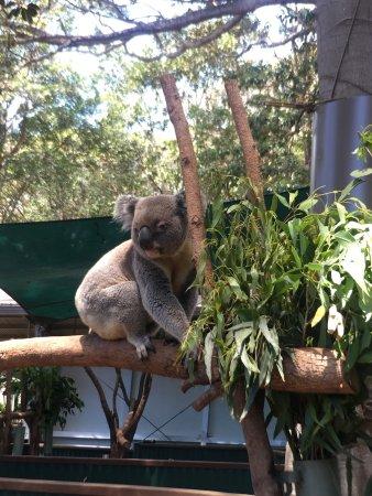 Currumbin, Australia: photo3.jpg