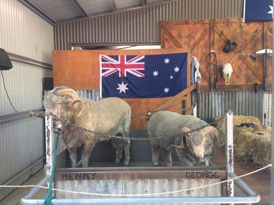 Currumbin, Australia: photo4.jpg