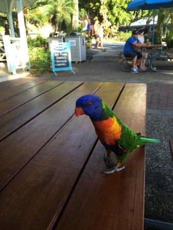 Currumbin, Australia: photo5.jpg