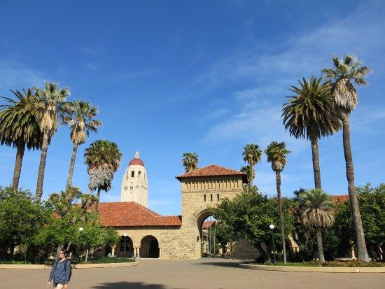 Palo Alto, CA: 摇曳的椰子树的映衬下