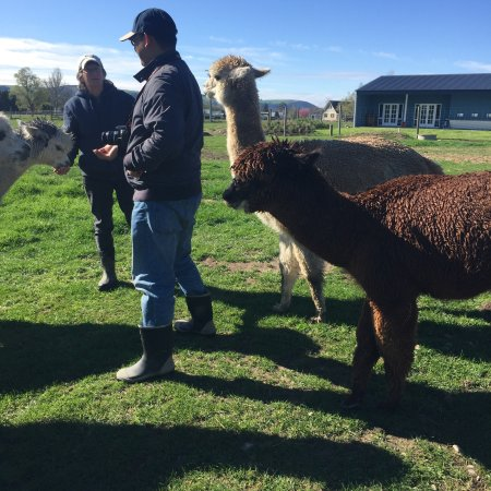 Fairlie, Nya Zeeland: It's an amazing trip. The farm is on the way back from Tekapo to Christchurch. Very convenient.