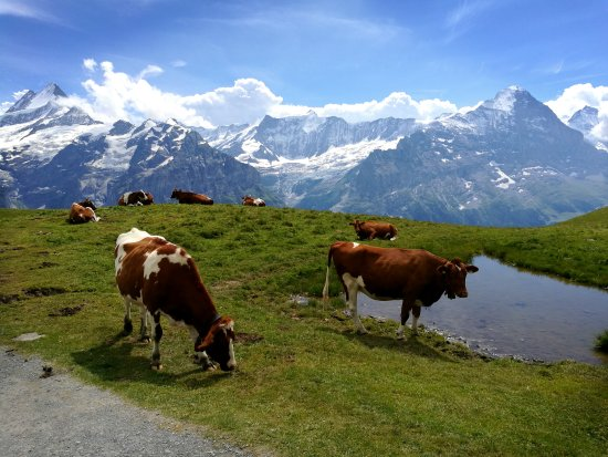 Grindelwald, Suiza: First