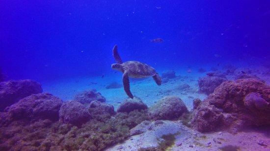 Garapan, Mariana Islands: Sakura Marine Sports