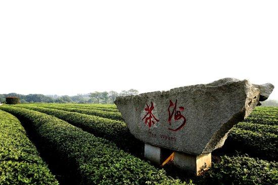 Nanchang, China: 茶海一景