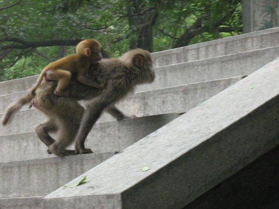 Lianyungang, China: 有不少的猴子