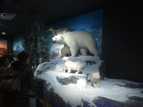 Zhejiang Natural Museum: 浙江自然博物馆