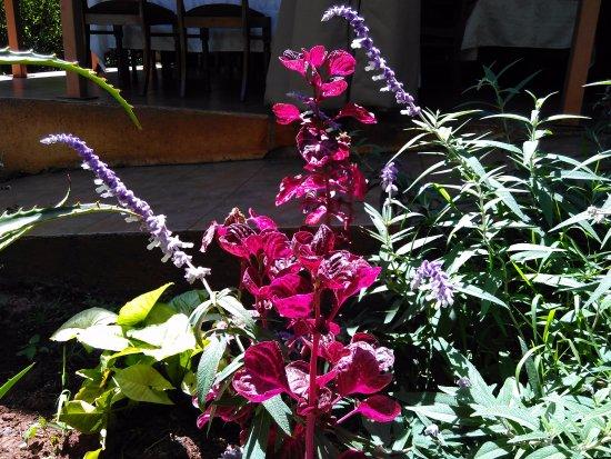 Cedars: 漂亮花